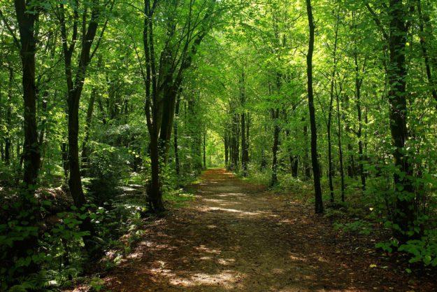 Waldbaden: Wie Sie im Wald Stress abbauen können
